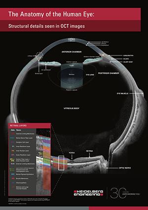 Whole Eye Poster