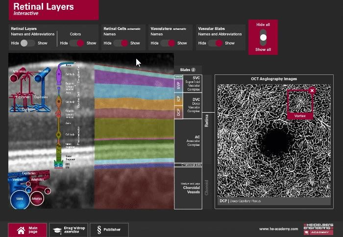 Retinal layers interactive