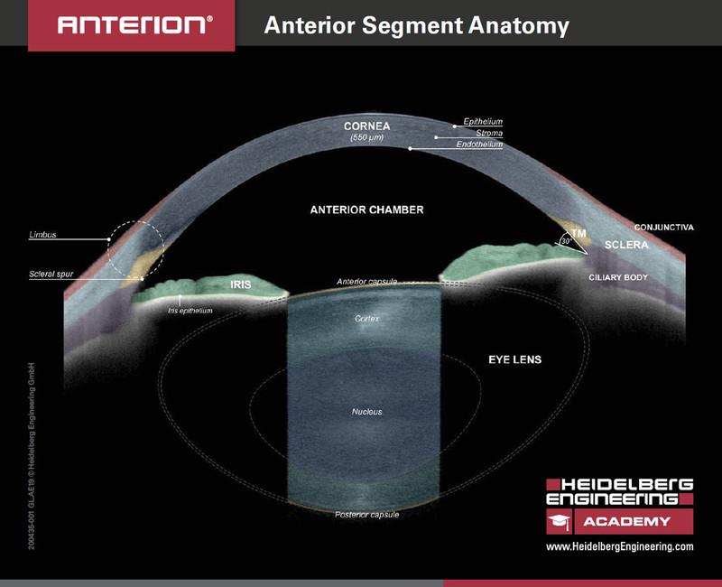 Handout Anterior Segment